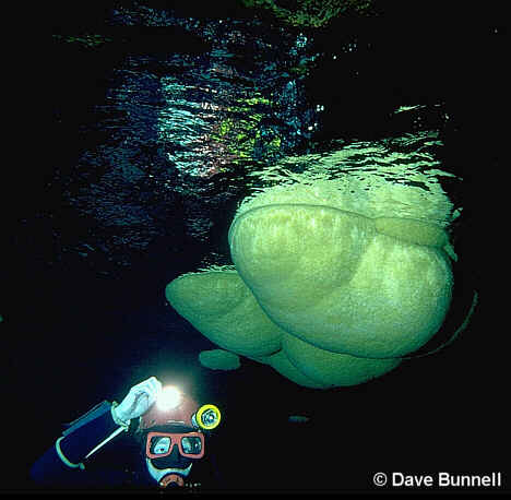 Underwater cave mammillaries!