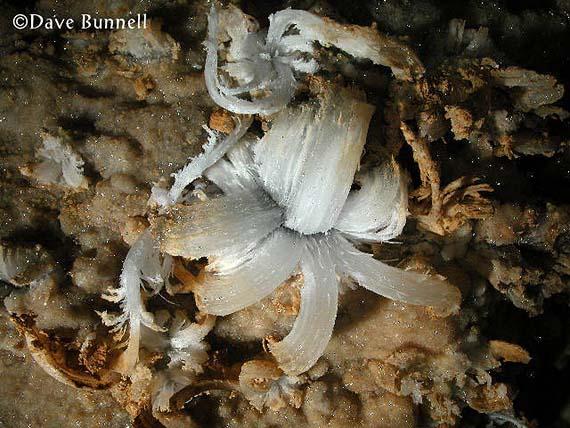 gypsum flower buy gypsum